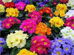 نگهداری گل های عید برای سال بعد